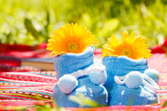 Blue booties and chrysanthemum Stock Image