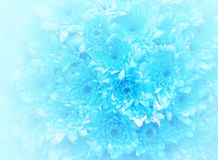 Blue bouquet background. Blue bouquet background soft light stock images