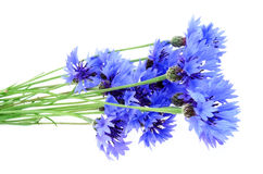 Blue bouquet of cornflowers Royalty Free Stock Photo
