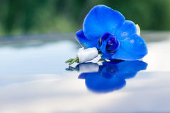Blue boutonniere Royalty Free Stock Images