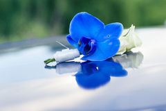 Blue boutonniere Stock Images