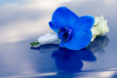 Blue boutonniere Stock Photo