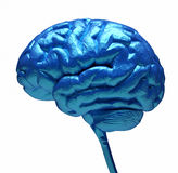 Blue brain Royalty Free Stock Photos