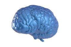 Blue brain Royalty Free Stock Photos
