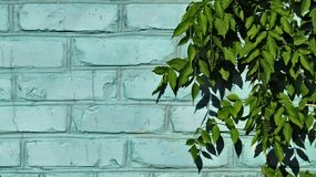 Blue brick wall and green leaves royalty free stock images