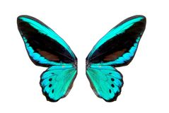Blue brilliant butterfly Royalty Free Stock Photography