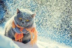Cat wearing knitted scarf royalty free stock photos