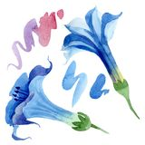 Blue brugmansia floral botanical flowers. Watercolor background set. Isolated brugmansia illustration element. Blue brugmansia floral botanical flowers. Wild stock photo
