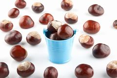 Blue bucket with chestnuts and peeled horse-chestnuts. On white background royalty free stock photo