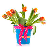 Blue bucket with orange tulips and festive bow Royalty Free Stock Photos