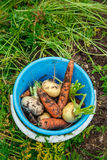 Blue bucket with vegetables Royalty Free Stock Photography