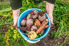 Blue bucket with vegetables Stock Images