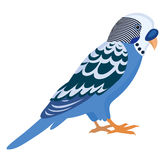 Blue budgerigar with colorful feathers, isolated  illustra Royalty Free Stock Photos