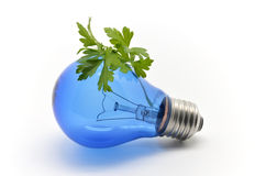 Blue bulb and parsley Stock Photo