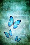 Blue butterflies. Three blue butterflies over a grunge background with text Stock Photo