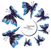 Blue butterflies on black. Blue butterflies on white background royalty free illustration