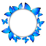 Blue butterflies frame Royalty Free Stock Photo