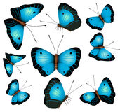 Blue butterflies isolated on a white background Stock Photo
