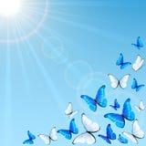 Blue butterflies on sky background Stock Photo