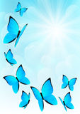 Blue butterflies on sunny sky. Background Royalty Free Stock Photography