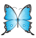 Blue butterfly. Stock Images