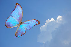 Blue butterfly. Fly on background sky royalty free stock images