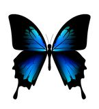 Blue butterfly. Butterfly on the white background Stock Photos