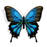 Blue butterfly. Excellent  vector blue butterfly  on white background Stock Photos