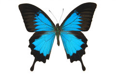 Free Blue Butterfly Royalty Free Stock Photo - 5407675