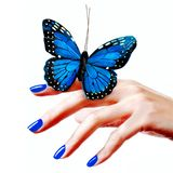 Blue butterfly royalty free stock image