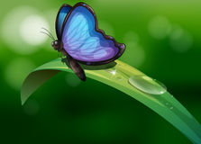 A blue butterfly above a leaf Royalty Free Stock Photos
