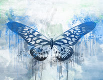 Blue butterfly on abstract background. Blue butterfly on abstract hand painted watercolor background Royalty Free Stock Image