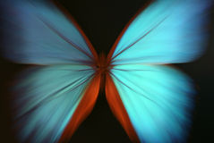Blue Butterfly Abstract With Zoom Royalty Free Stock Images