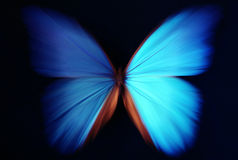Blue butterfly abstract with zoom. Beautiful butterfly blue abstract with zoom effect - morpho Royalty Free Stock Photos