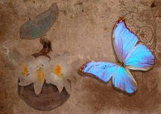 Free Blue Butterfly And White Lily Royalty Free Stock Image - 24890496