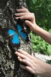Blue  butterfly and hands Royalty Free Stock Photography