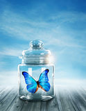 Blue butterfly closed. In a jar Stock Image