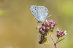 A blue butterfly on a flower stock photos