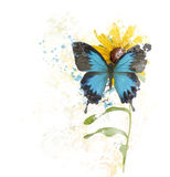 Blue Butterfly on a Flower Stock Image