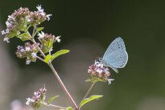 A blue butterfly on a flower stock photo