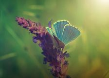 Blue butterfly on flower stock images