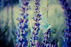 Blue butterfly on flower Stock Image