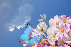 Blue butterfly and flowers Royalty Free Stock Image