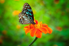 Blue butterfly fly Stock Photos