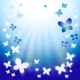 Blue butterfly flying to sun. Abstract vector background with flying butterflies Stock Photography