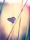 Blue butterfly on the grass Royalty Free Stock Photography