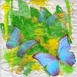 Blue butterfly on  watercolor background Royalty Free Stock Photos