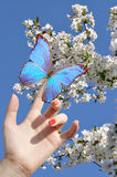 Blue butterfly on hand Royalty Free Stock Image
