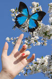 Blue butterfly on hand Stock Image