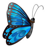 A blue butterfly Stock Image
